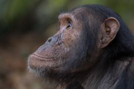 Animal Personhood: A Debate